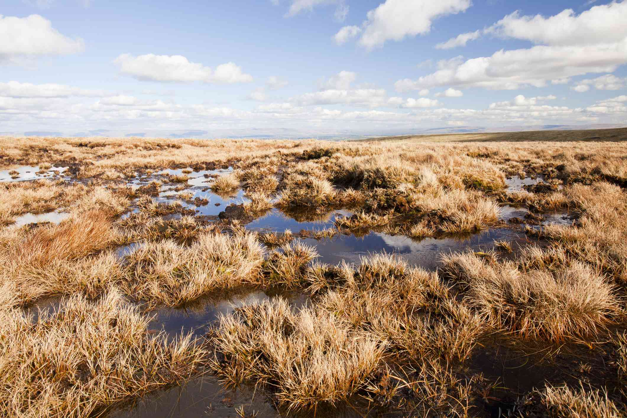 wet peat bogs in the UK