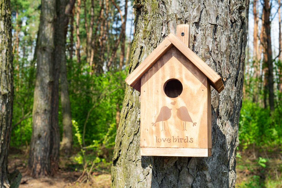Wooden birdhouse with illustration and text attached to a tree trunk