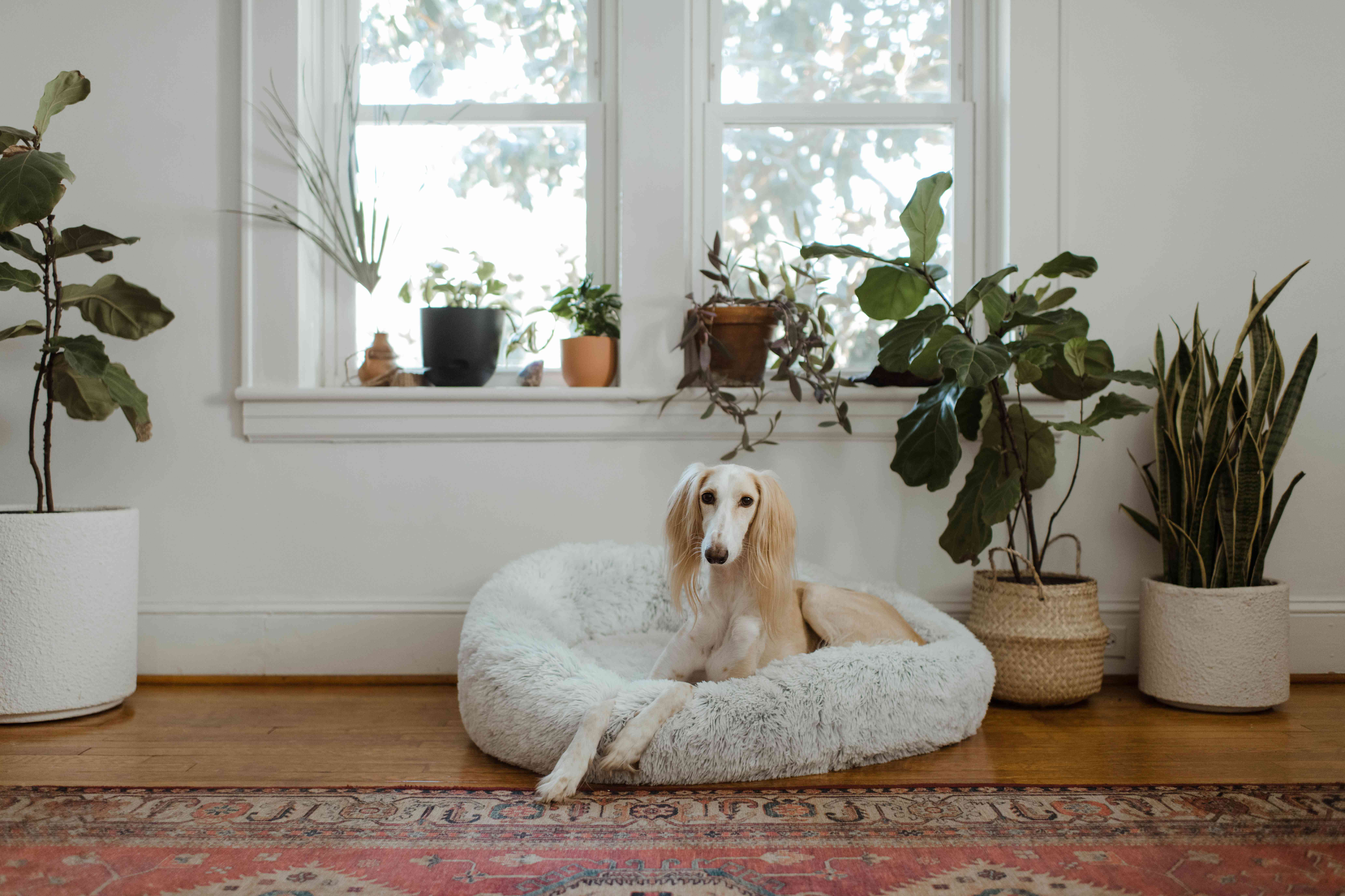 dog in its designated bed area