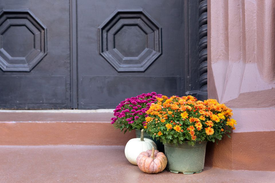 mums and pumpkins on a stoop