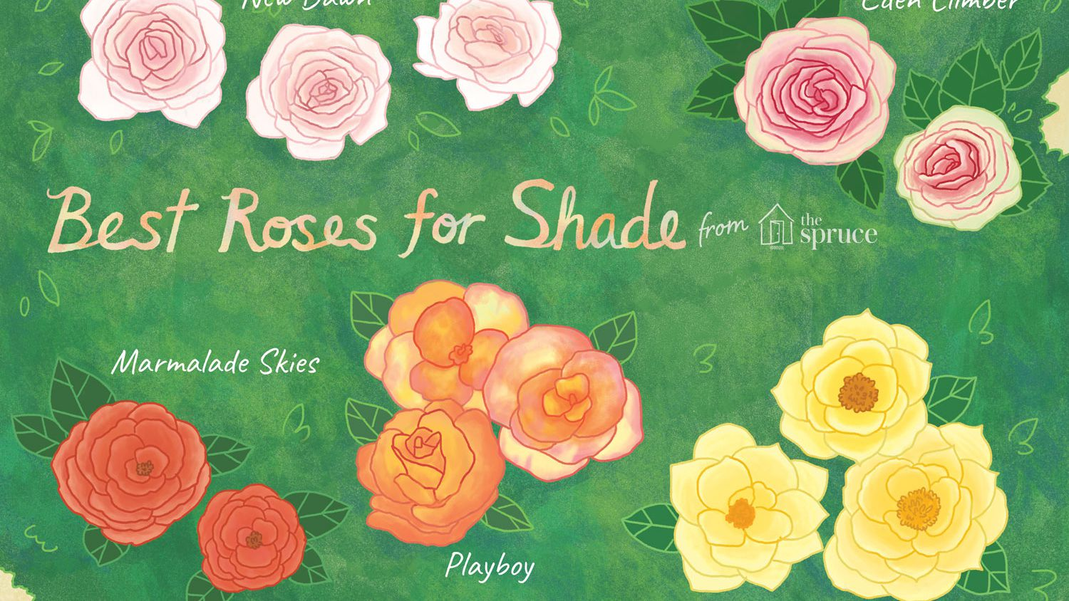 18 Great Roses Varieties For Shady Gardens