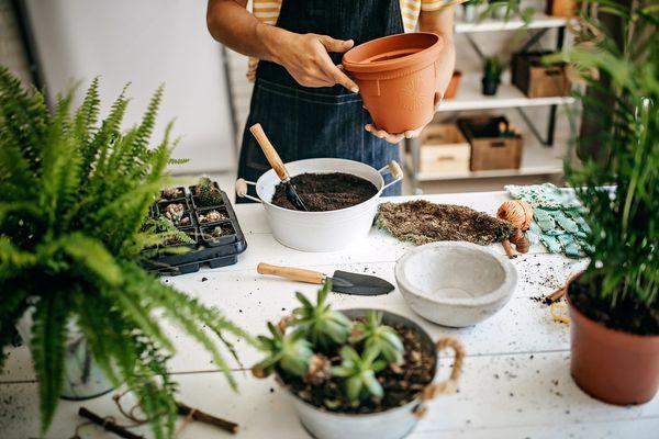 Florist preparing flower pot for plant