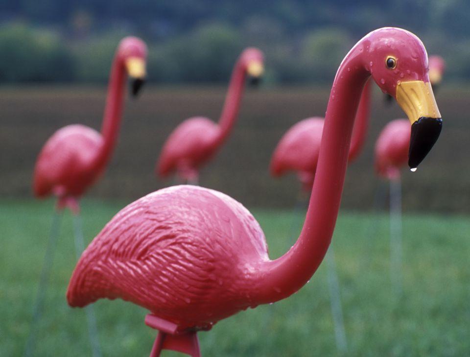 Plastic Flamingos on Lawn