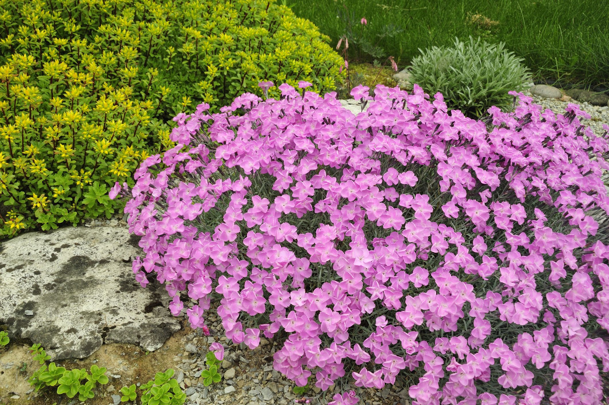 Rock Garden Plant Selection Guide Sun Plants Zone 5