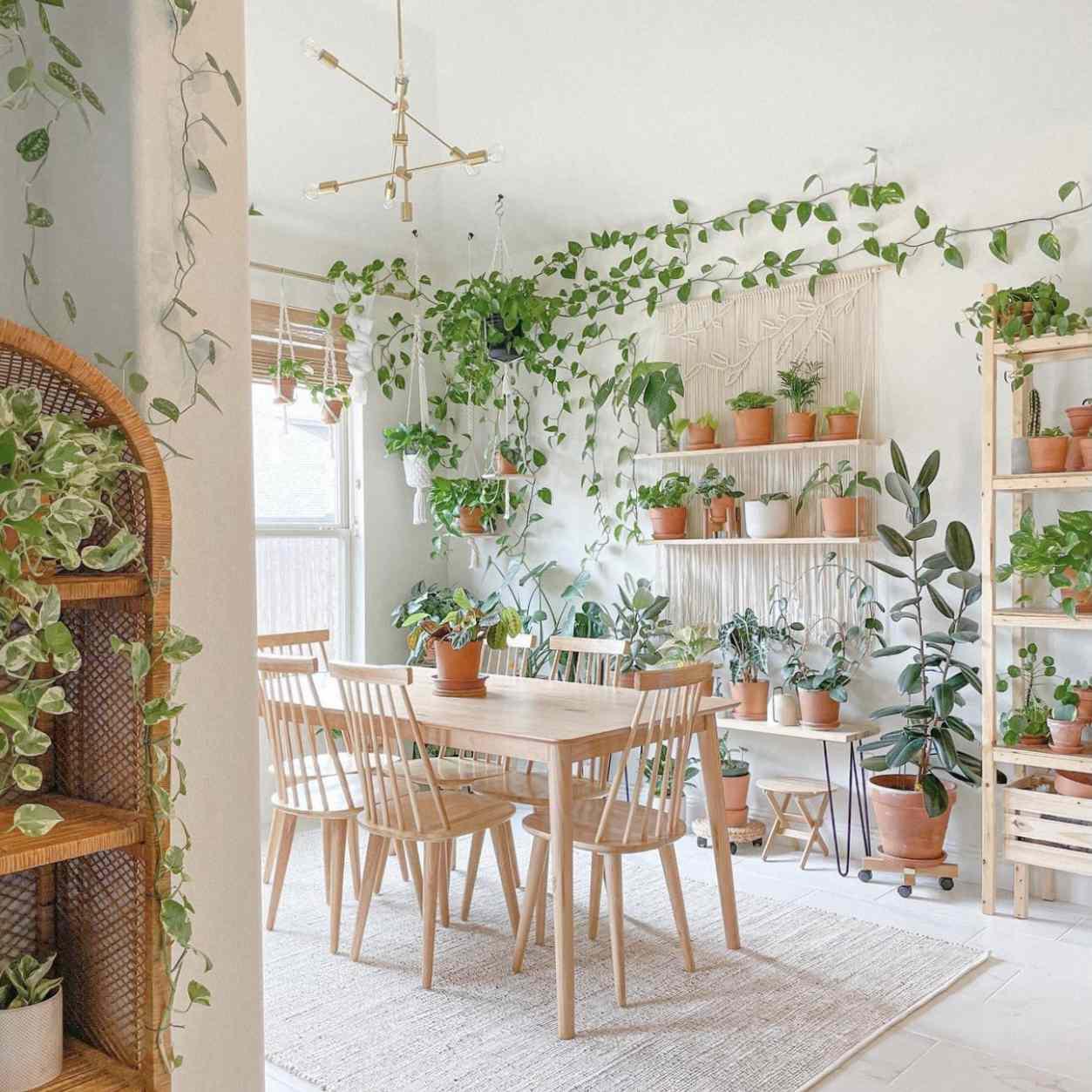 Kelly Phan plant shelf