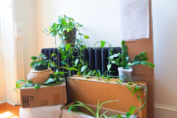 Houseplants on top of moving boxes and radiator