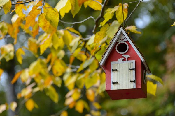 Red birdhouse hanging on a colorful branch