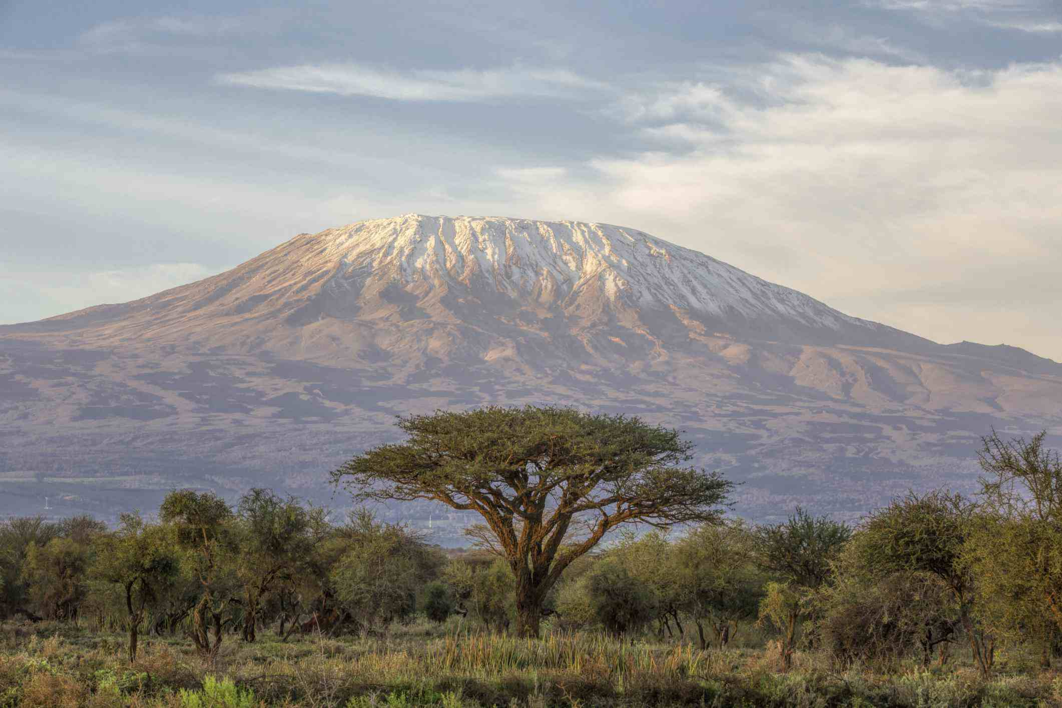 Mt Kilimanjaro and Acacia - in the morning