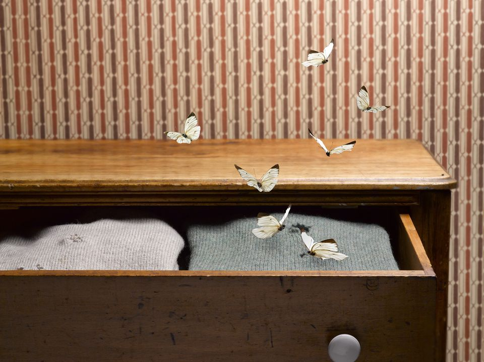 Moths flying around a drawer of sweaters.