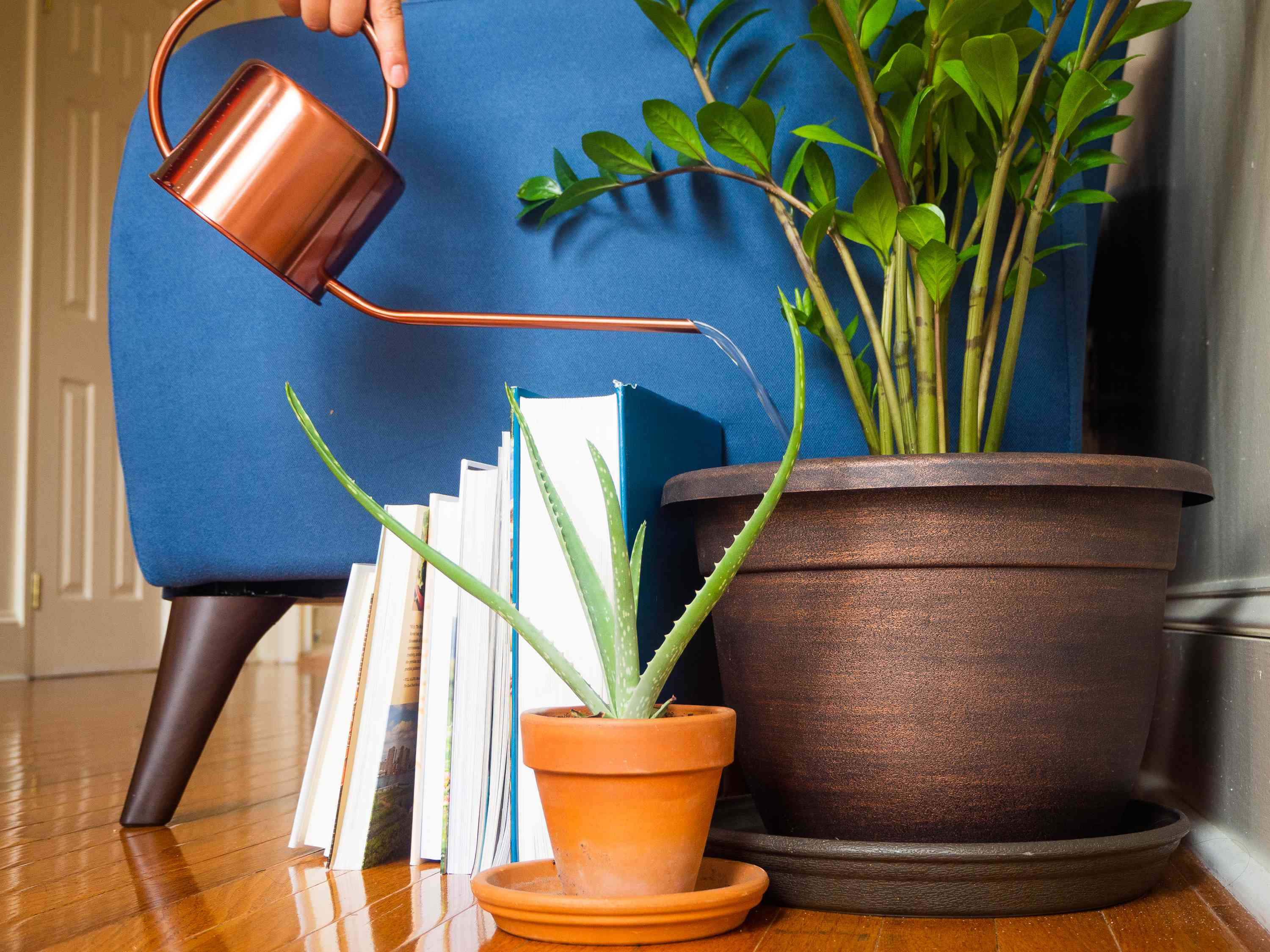 Copper watering can pouring water over houseplant next to blue couch and books after move
