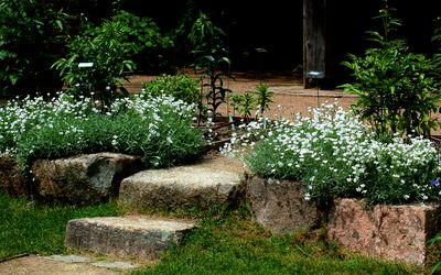 - Landscaping Advice