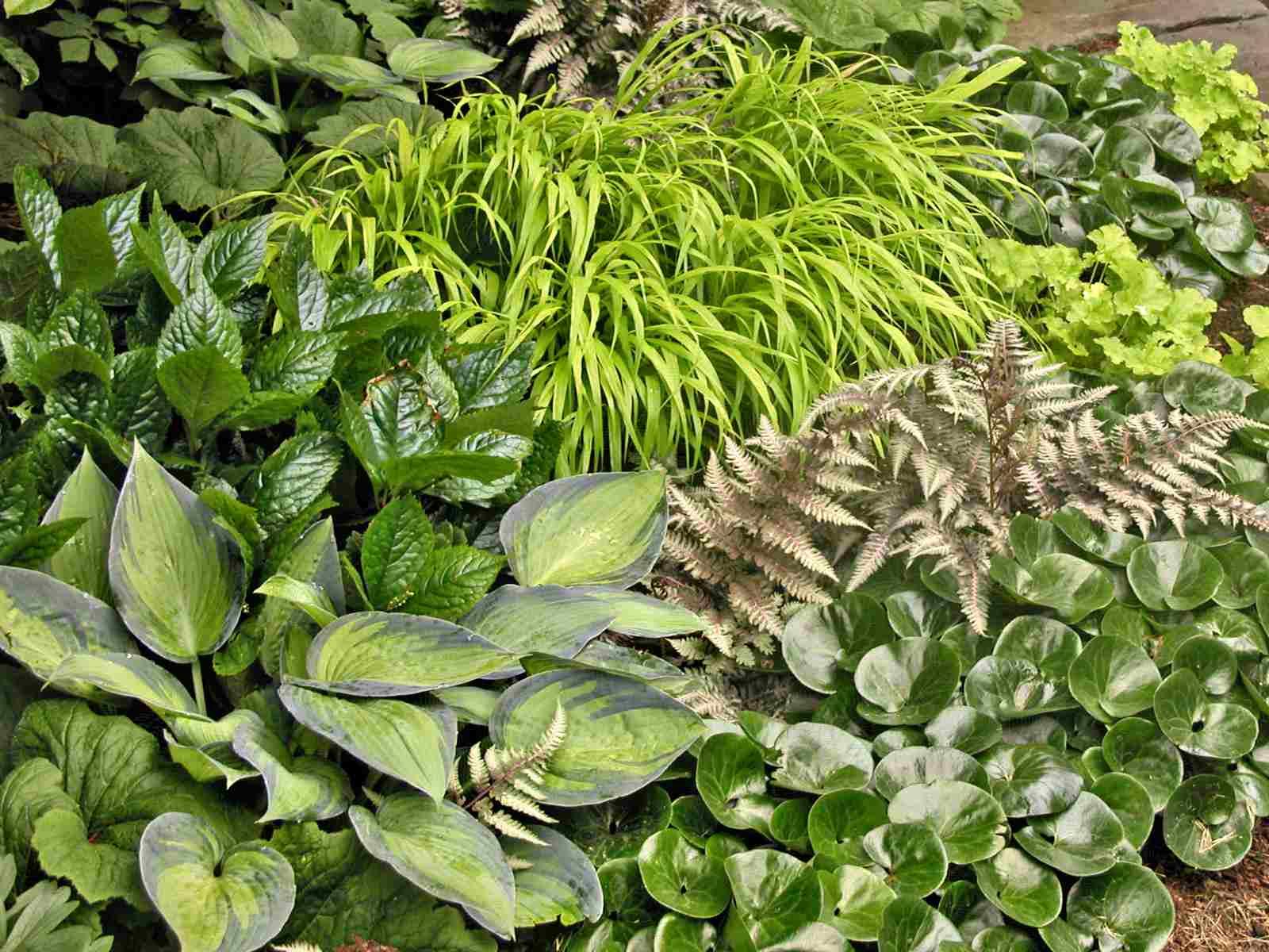 Un grupo de diferentes arbustos