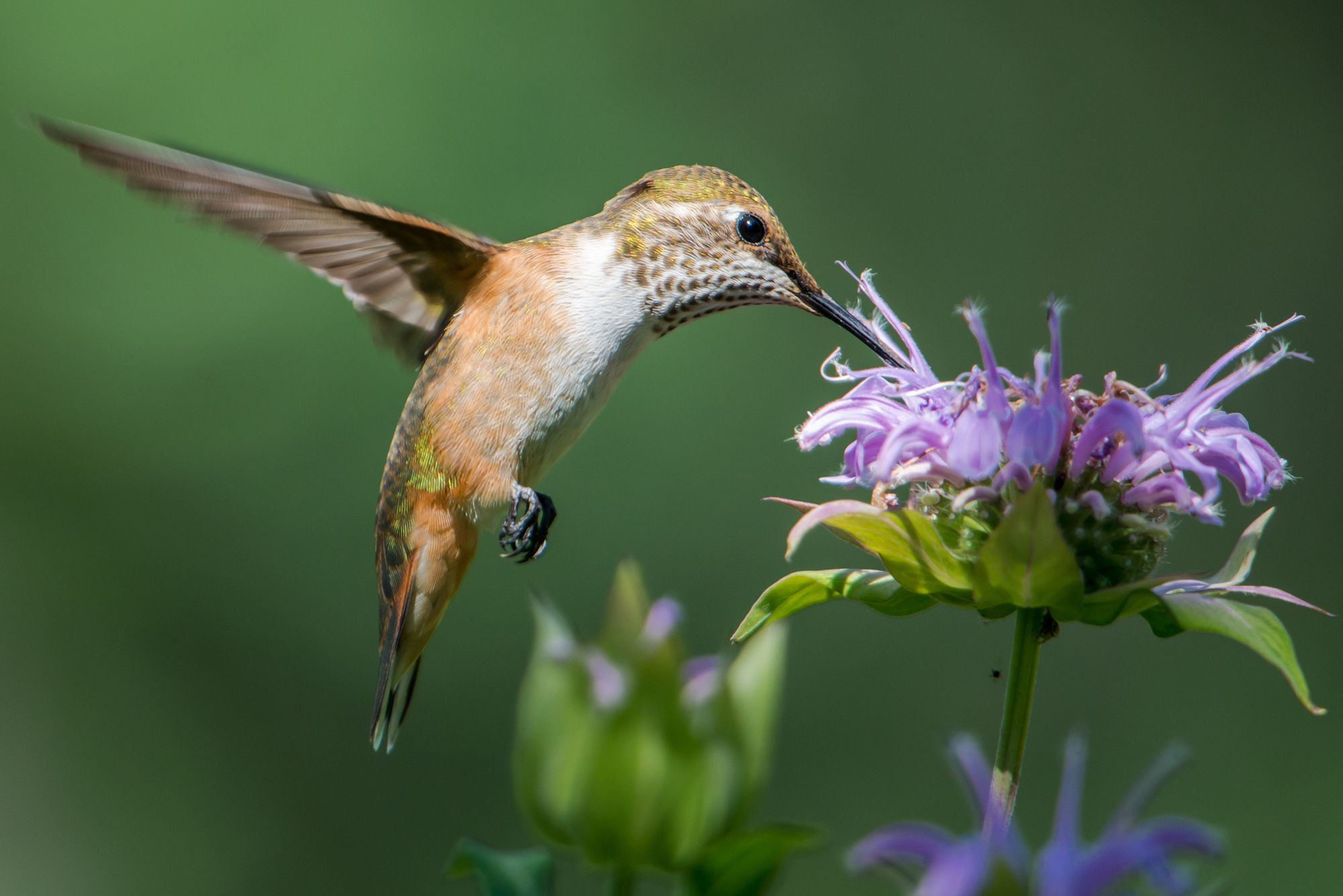 Best Flowers To Attract Hummingbirds To Your Yard