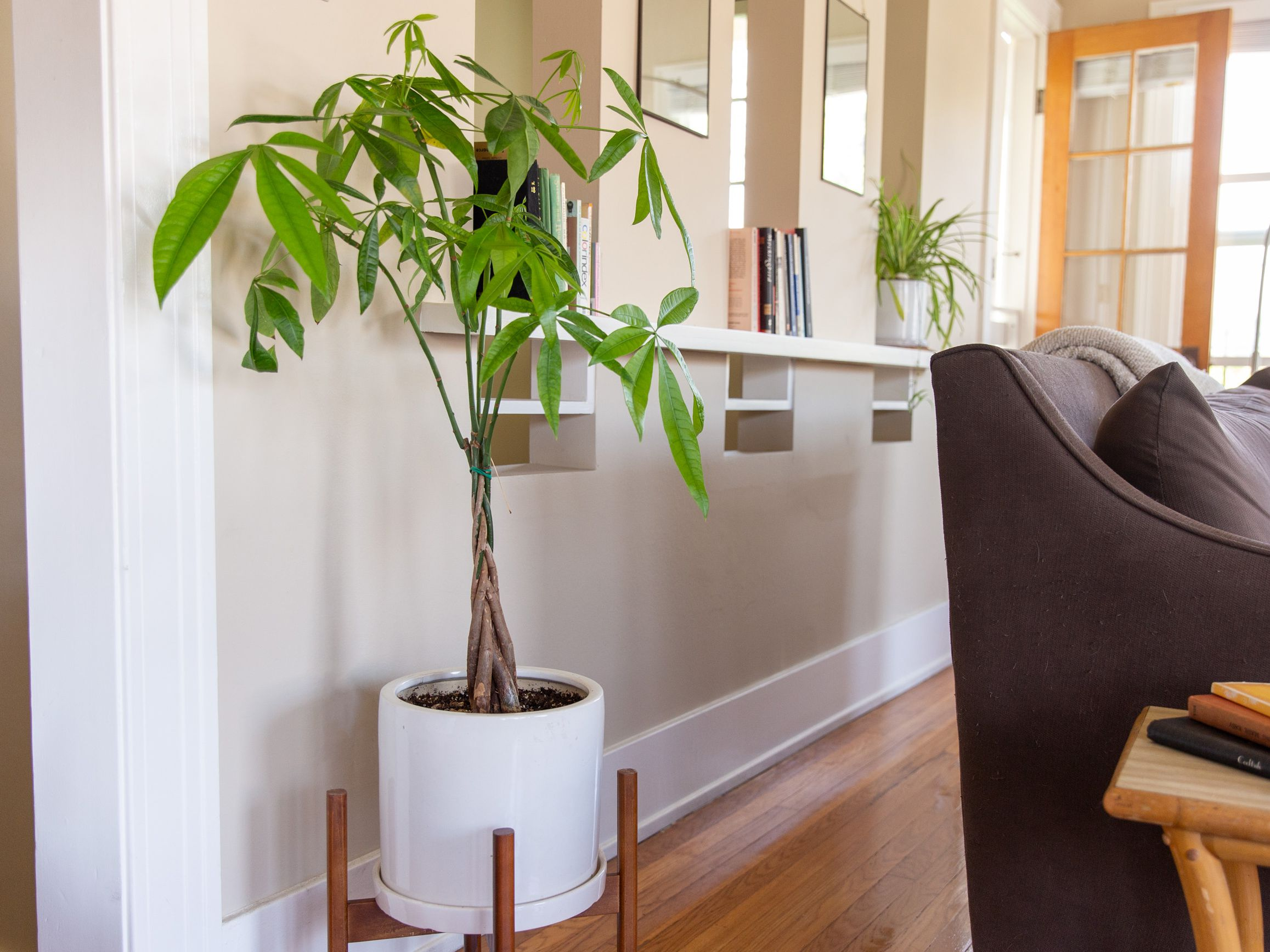 The Feng Shui Money Plant And How To Place One
