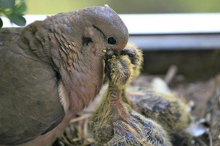 Bird Crop Definition - Anatomy and Digestion