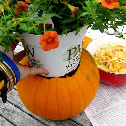 putting plant in pumpkin