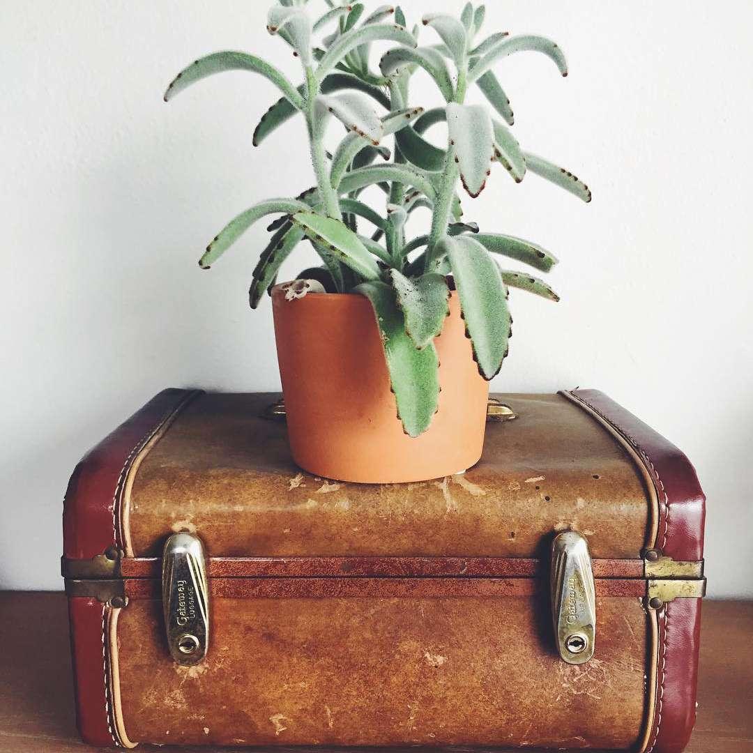 plant on suitcase