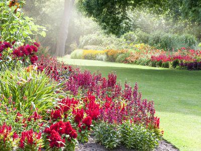 low maintenance perennial flowers