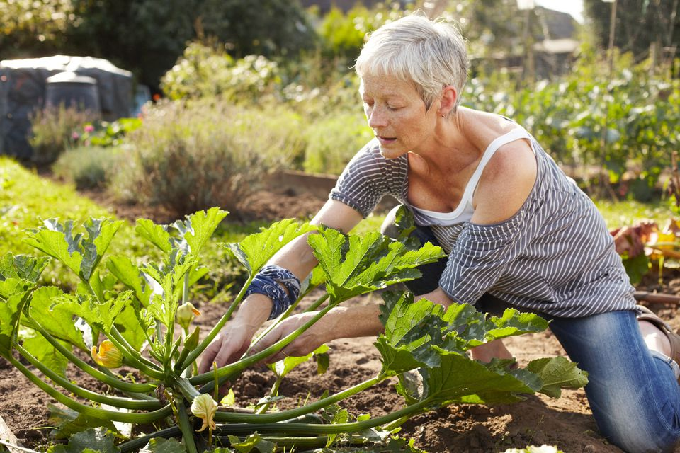 Shady Vegetable Garden Ideas