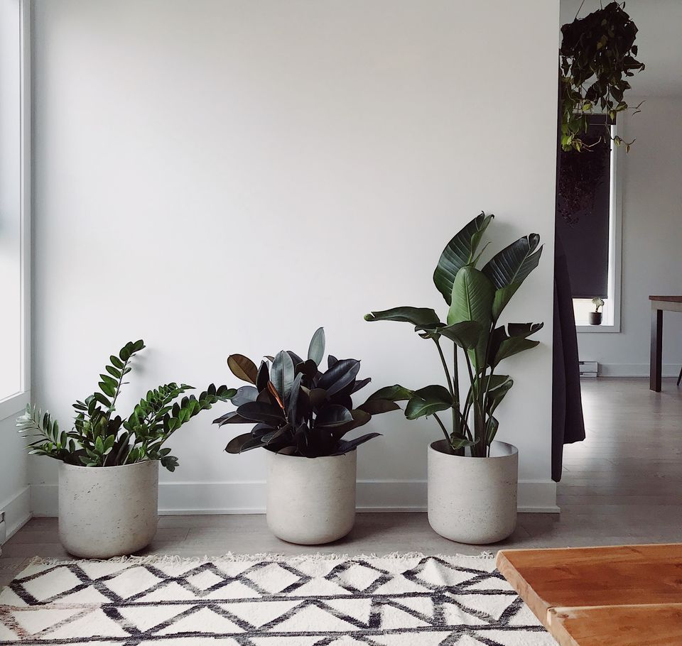 Living room with four air-purifying house plants