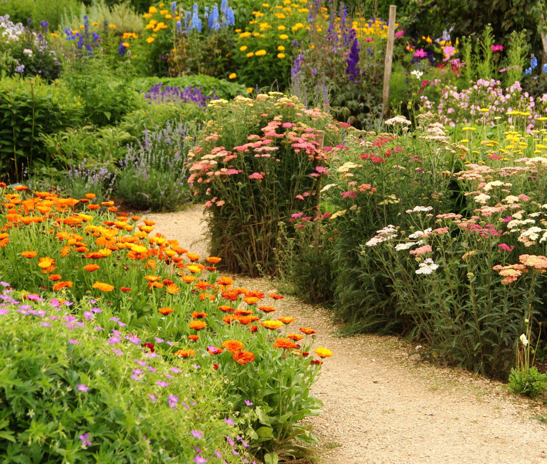 Jardín de hierbas y flores