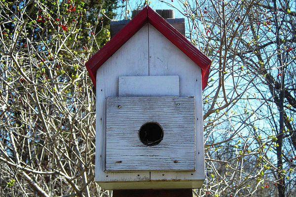 Bird roost box near trees.