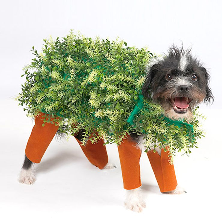 Chia pet costume for dogs