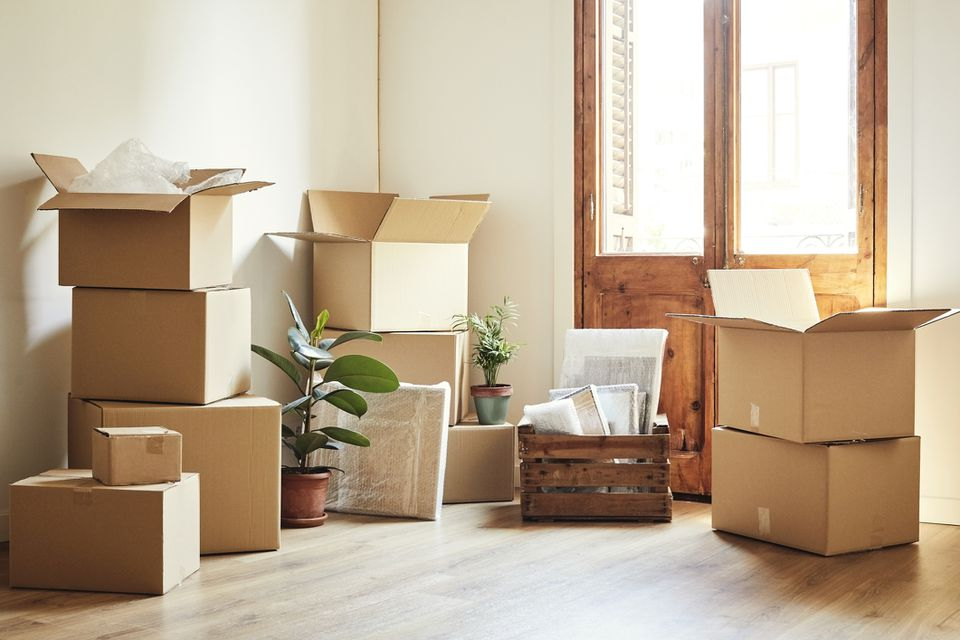 Moving boxes and potted plants at new apartment