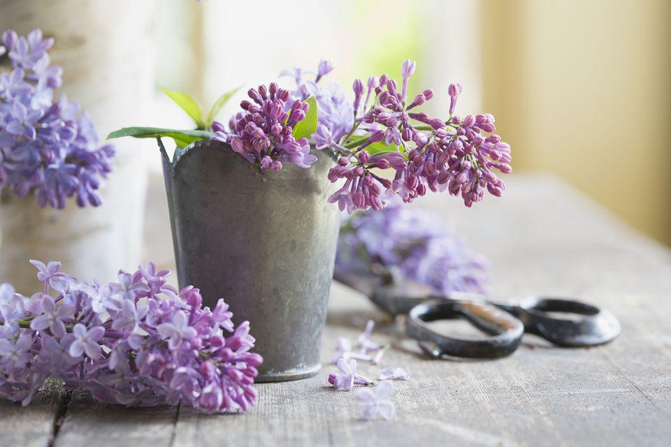 Cerca de lilas en florero