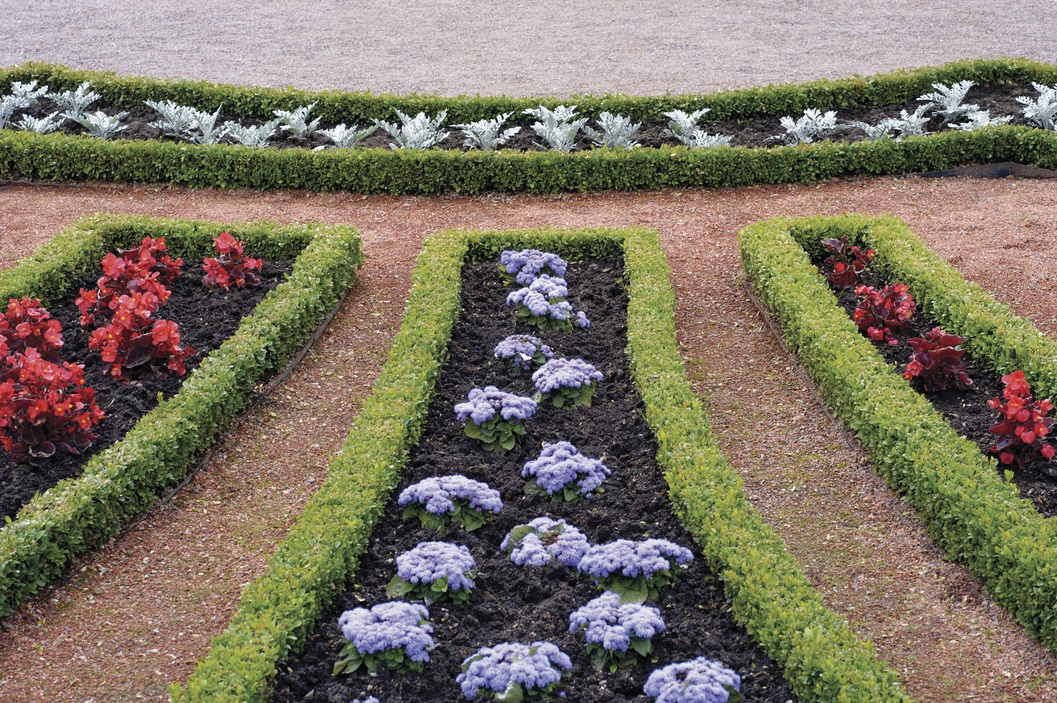 Boxwood, Begonia, Alyssum and Dusty Miller in a formal garden