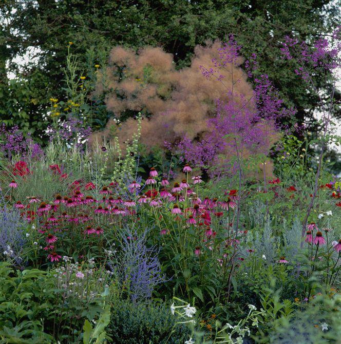 Jardín de equinácea