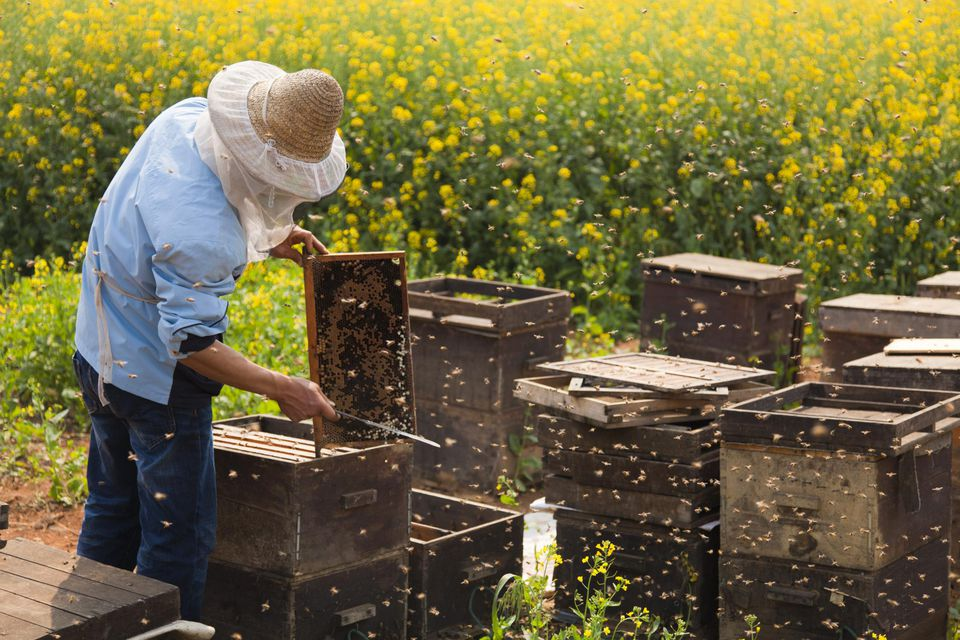 A beekeeper working in the fields