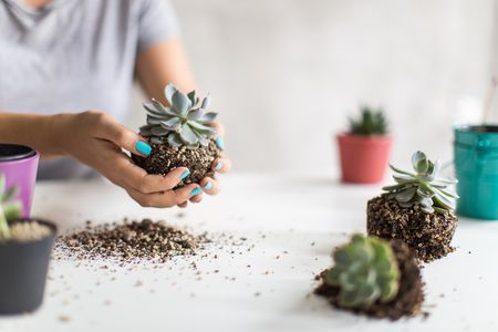How to Repot Houseplants