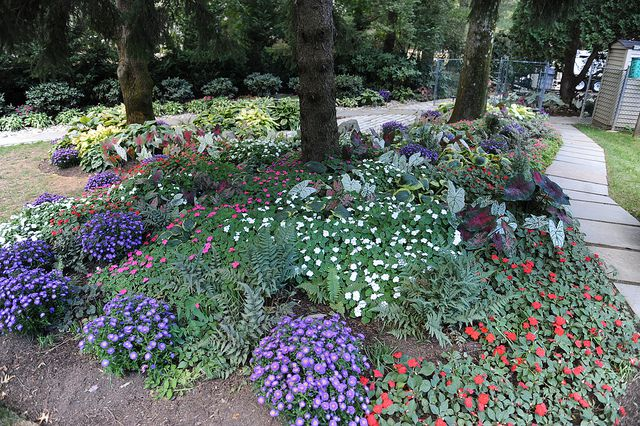Top 12 Flowers For Your Shade Garden