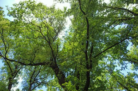10 Species of Elm Trees