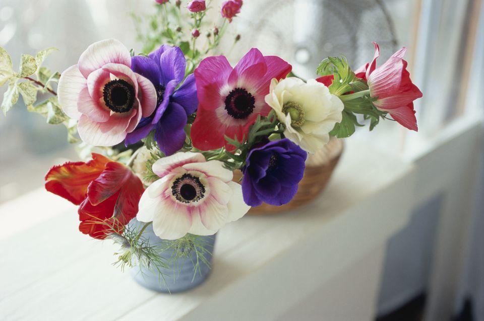 Variedades de flores de anémona