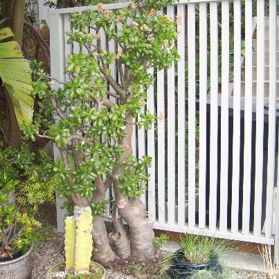 Outdoor Privacy Screens Ideas And Pictures