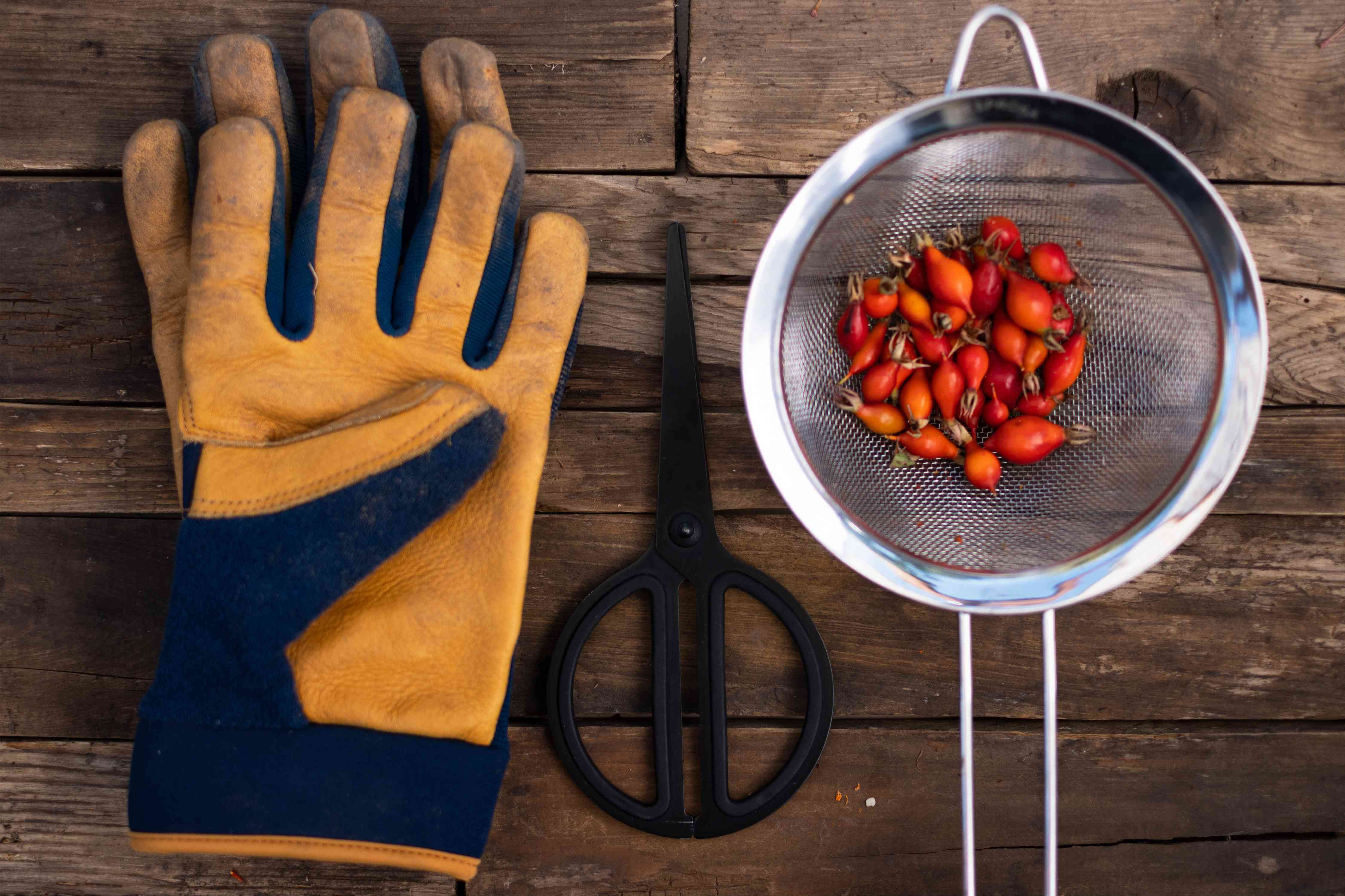 Materials and tools to harvest rose hips