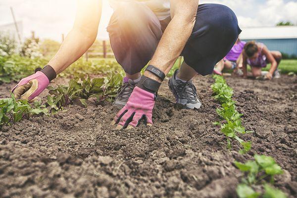 Gardener with pink gloves in a garden