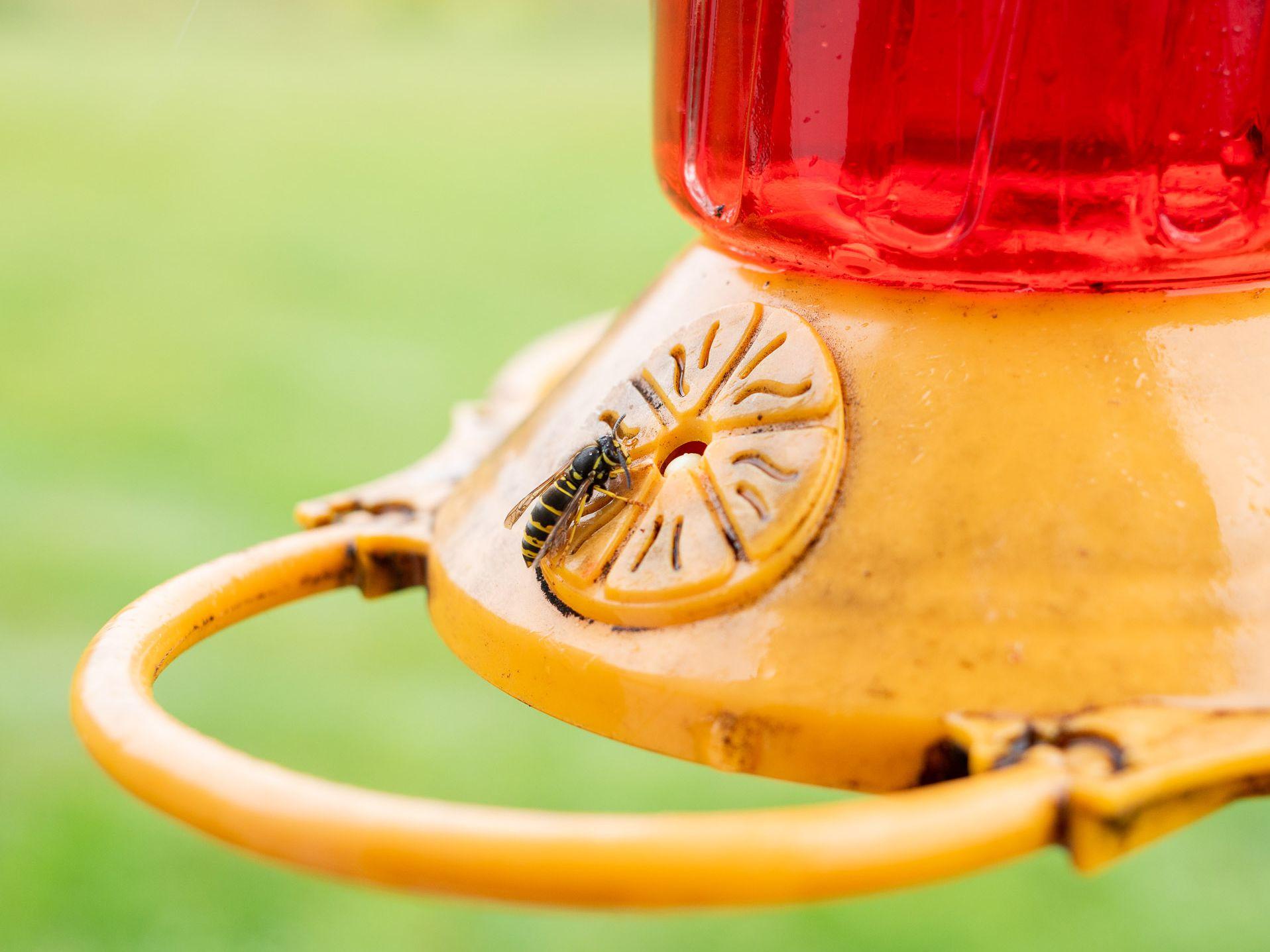 Keep Bees Off Hummingbird Feeders