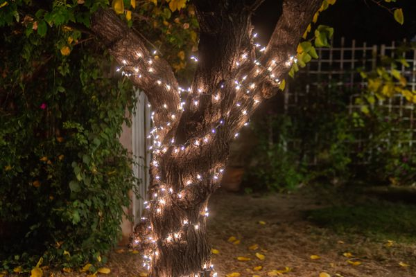 tree wrapped in string lights