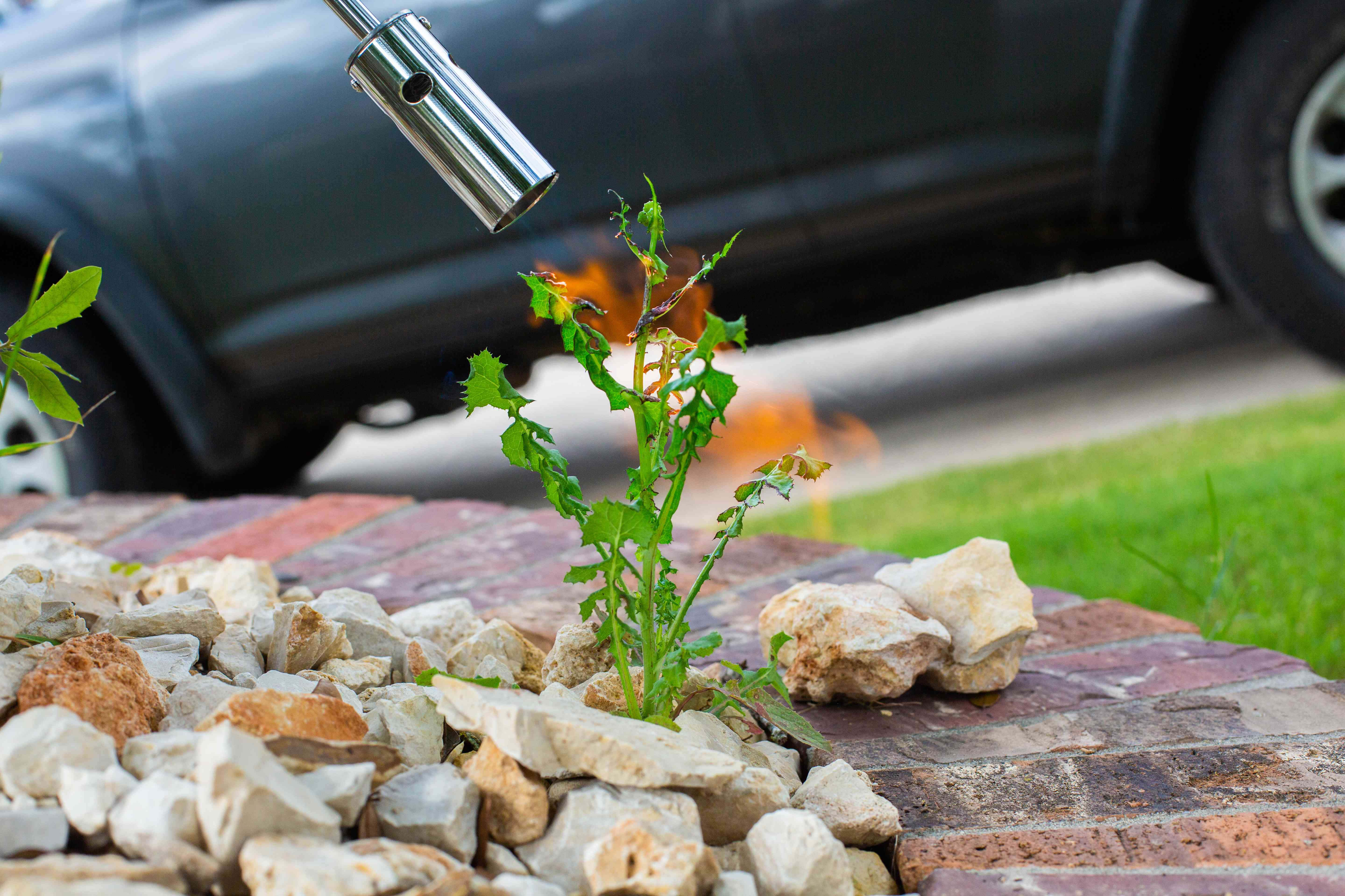 using a propane torch to kill weeds