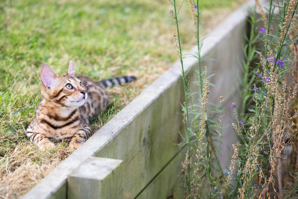 cat and wood retaining wall