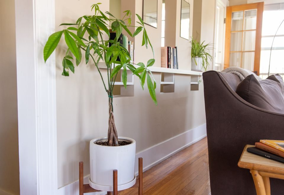 a money plant in the living room area