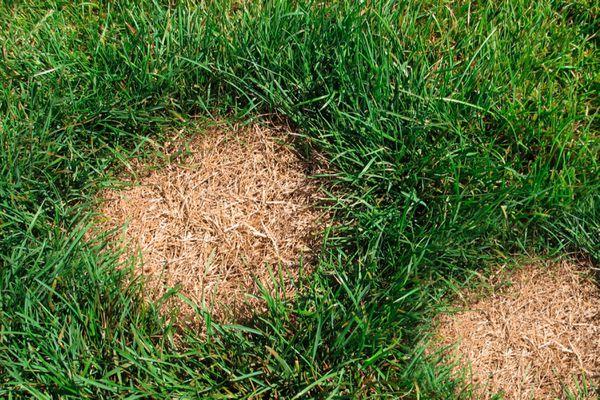 dead patch on lawn