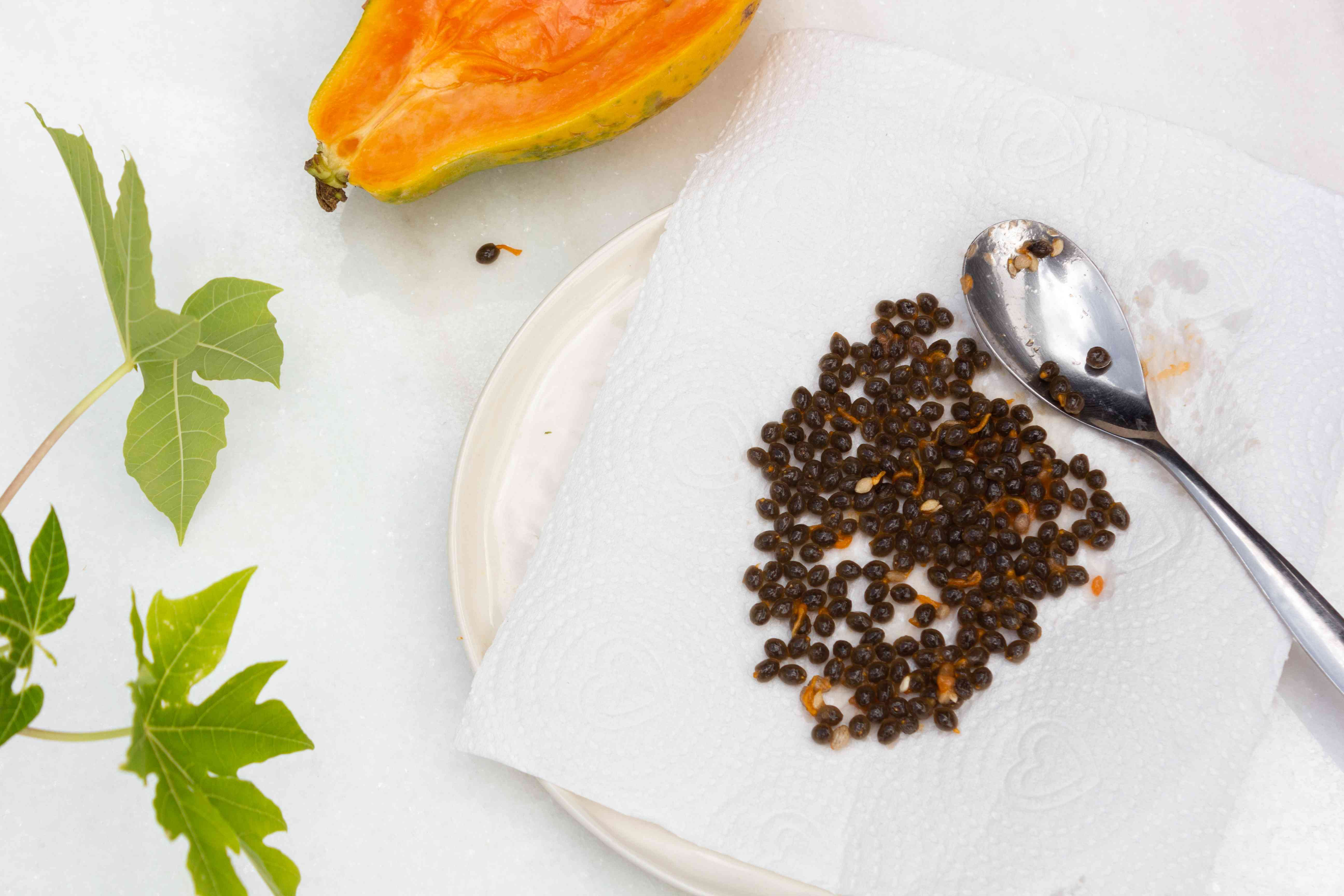 scooped out papaya seeds on a paper towel