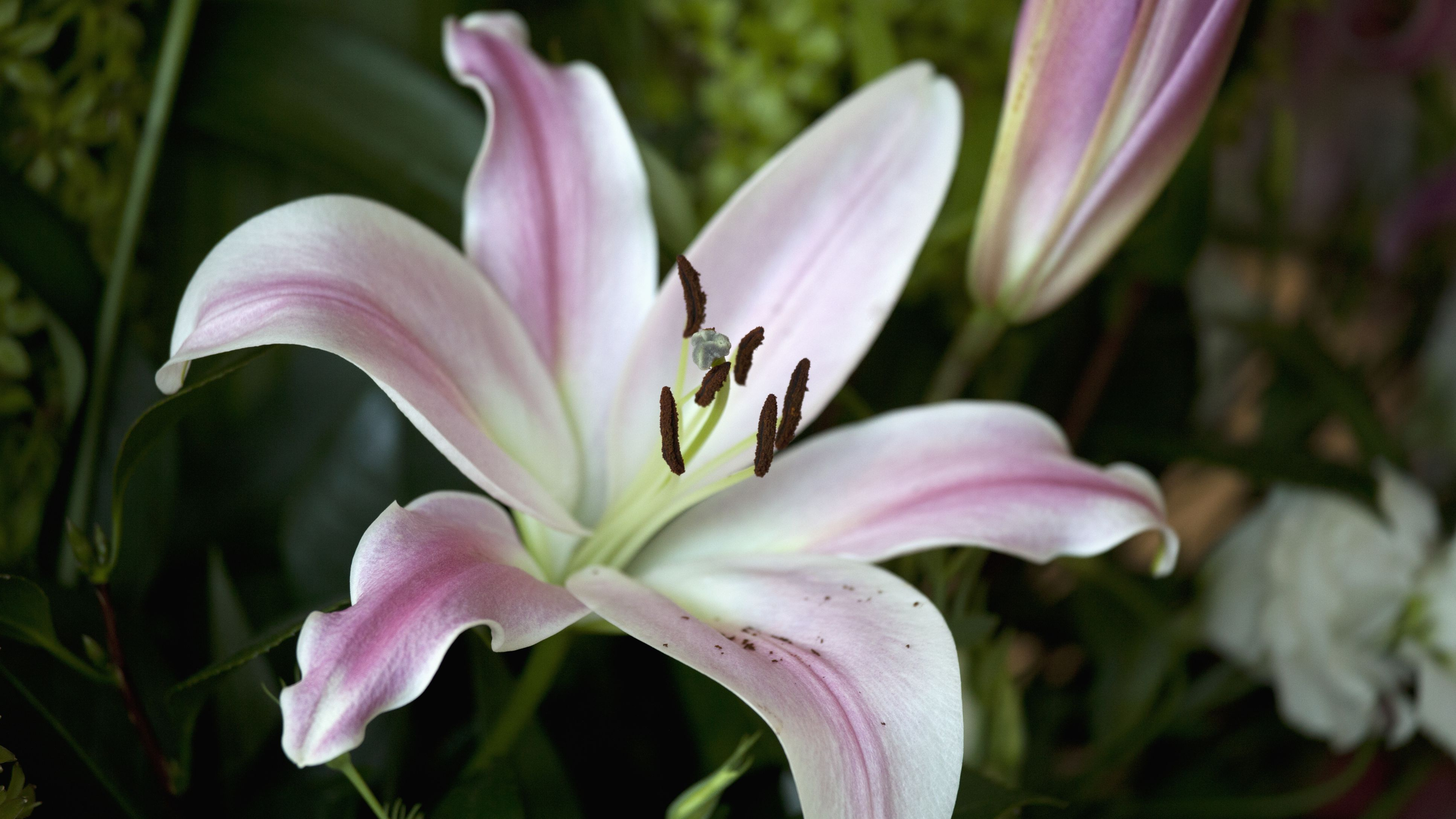 14 Recommended Lily Varieties For Your Garden