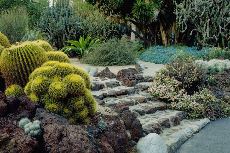 21 Best Cactus Plants to Grow in Your Garden Zone A Garden Bed Designs Ideas on garden bed tips, garden ideas for small spaces, garden fence ideas, garden dining design ideas, landscape design ideas, back yard flowers beds ideas, safe room design ideas, front garden design ideas, garden bed home, floral design ideas, garden window design ideas, small garden design ideas, modern garden ideas, garden edging ideas, detached carport design ideas, fairy garden miniature fairy garden ideas, country garden ideas, garden plans, rock garden design ideas, mediterranean house front yard design ideas,