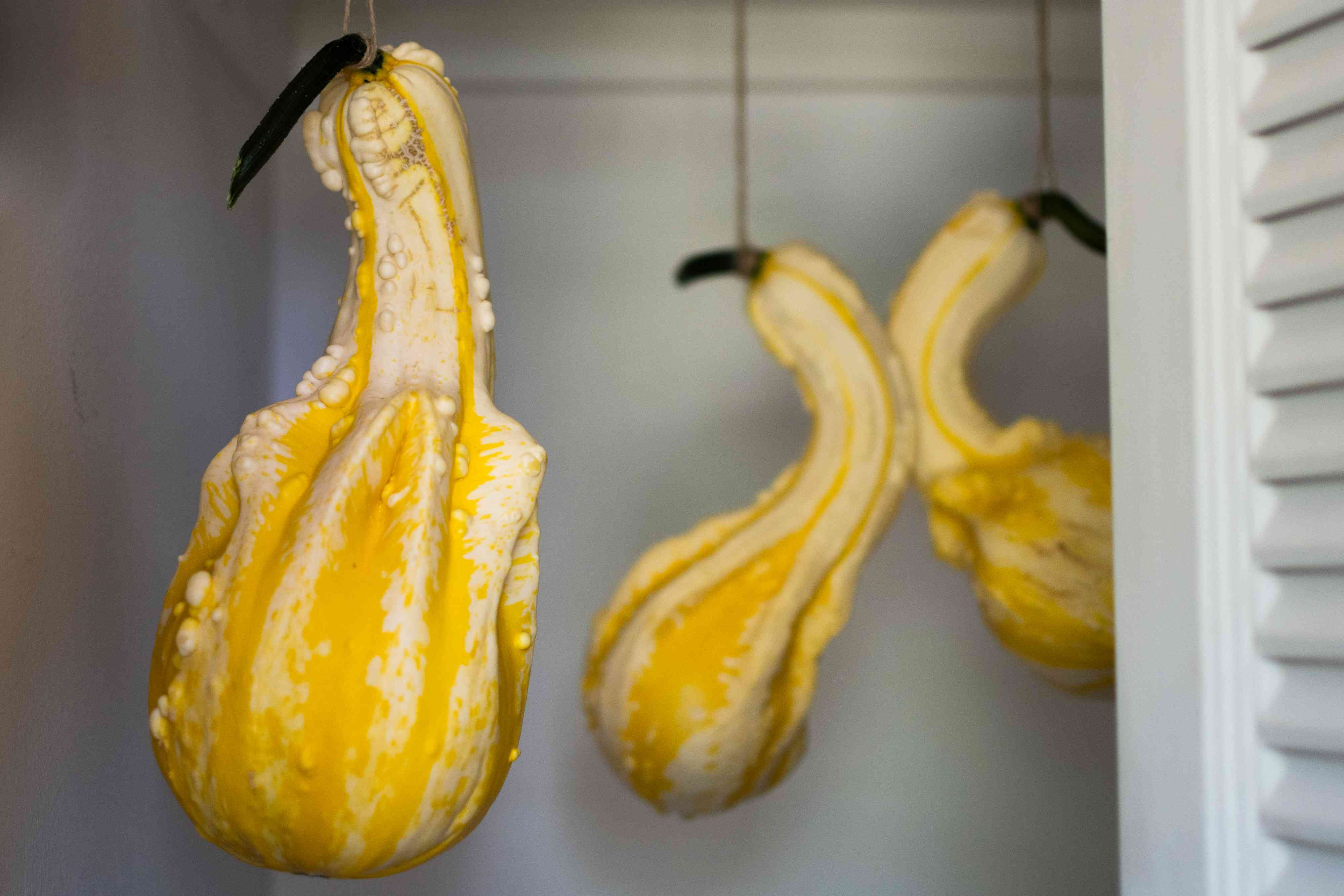 Yellow and white gourds hanging on twine in closet closeup