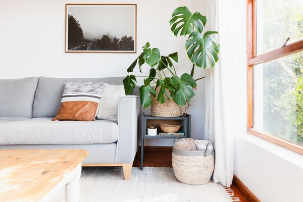 Brightly-lit living room with gray couch, tall houseplant and tan basket near window